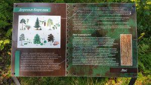 перечень деревьев