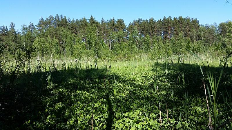 Типичный вид болота в заказнике