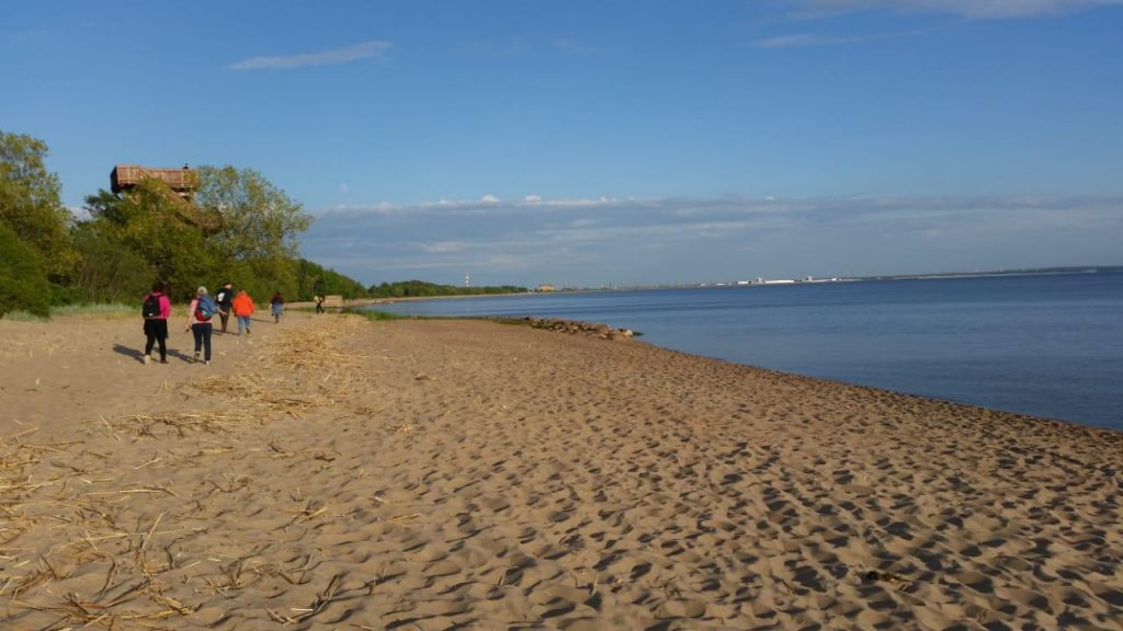 Котлинский пляж, на заднем плане - орнитологическая вышка