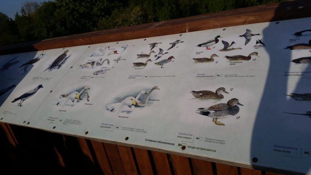 Информационный щит на вышке представляет птичье население заказника