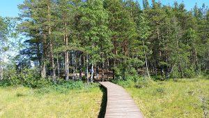 на входе в лес