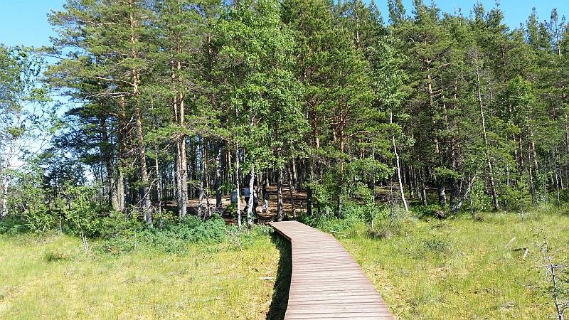 Экотропа, входящая в лес