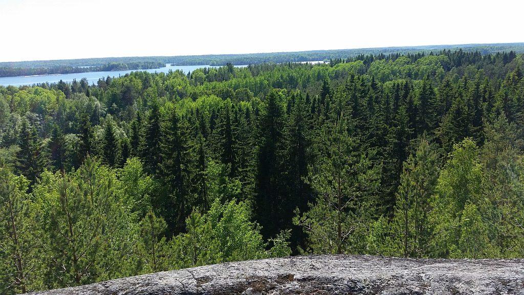 Безбрежный лес