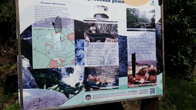 Информация о речных обитателях Рощинки
